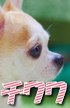 tiwawa3
